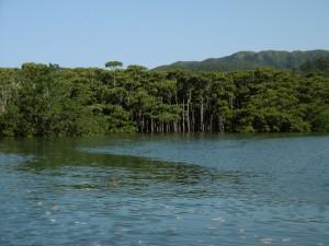 マングローブ植物