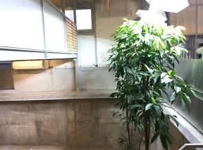 ブルーボトルコーヒー中目黒店店内写真