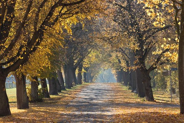 trees-1030853_640