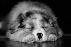 dog-1127486_1280