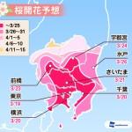 関東の開花予想(ウェザーニュース)