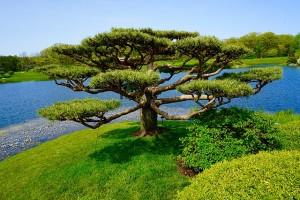 tree-1455078_640