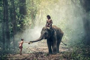 elephant-1822481_640