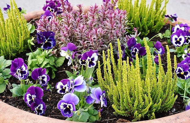 planting-2921805_640